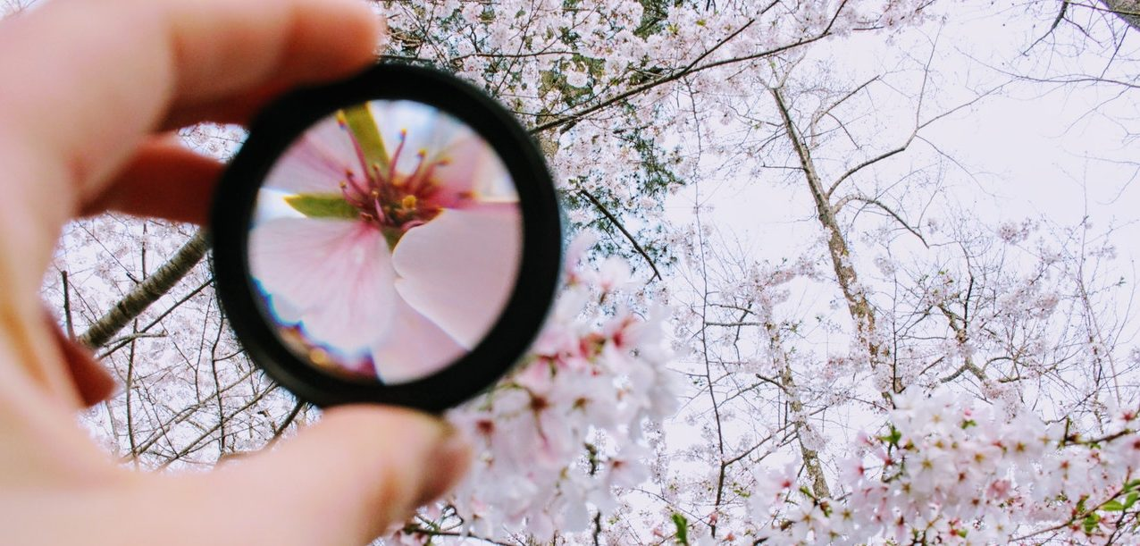 cherry blossoms through magnifying glass