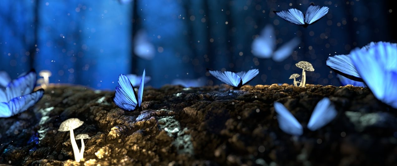 blue butterflies flying over mushrooms