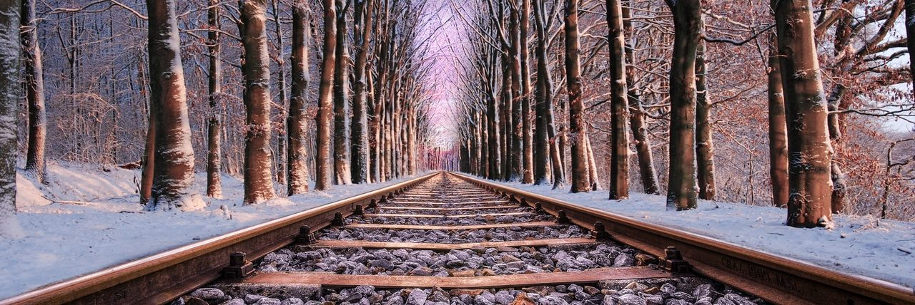 Tree lined railroad tracks