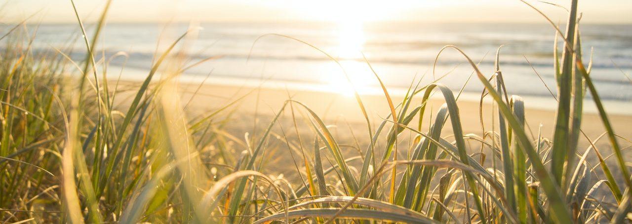 sea oats on the beach at sunrise
